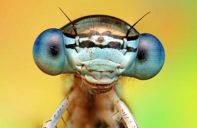 0001_7wphxizn-macro-fotografia-de-insectos-arte-fotografia-insectos-macro