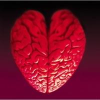 10 datos del amor en tu cerebro | Innovación Libre