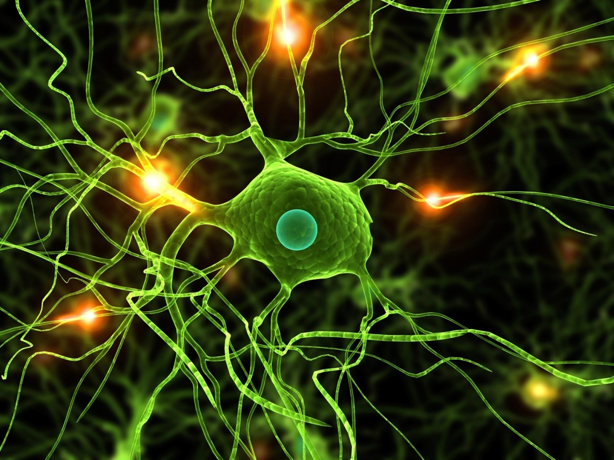 ¿A qué velocidad viajan señales nerviosas? | Innovación Libre