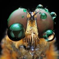 10 macrofotografías impresionantes | Innovación Libre